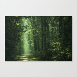 Another Sunlit Woodland Canvas Print