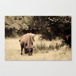 Bison Roaming the Great Plains Canvas Print