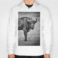 buffalo Hoodies featuring Buffalo by davehare
