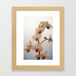blue orchid Framed Art Print