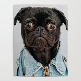 Cute Black Dog - Face Portrait Poster