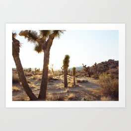 Joshua Tree, CA  / Dec 2013 Art Print