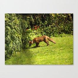 Fox on the prowl Canvas Print