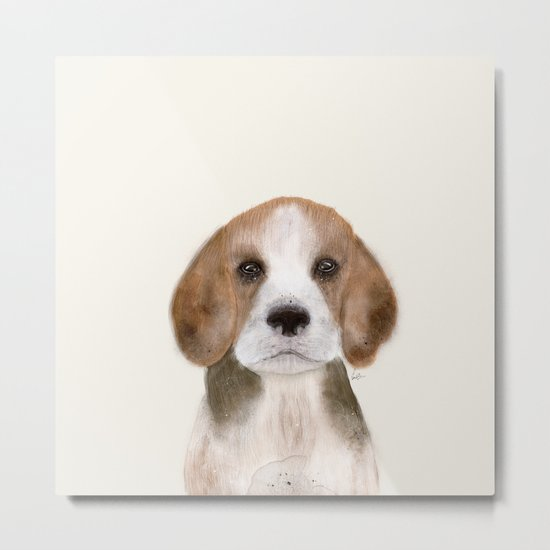 little beagle Metal Print