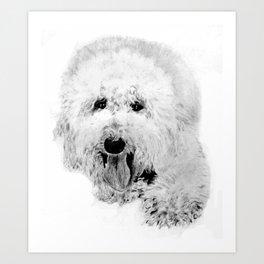 Labradoodle Art Print
