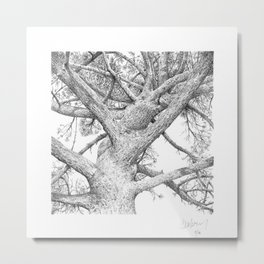 Tree at St Mabyn Metal Print
