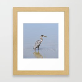 Great Blue Heron Fishing - II Framed Art Print