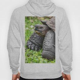 Galapagos Giant tortoise Hoody
