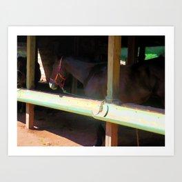 Horse in shelter 3 Art Print