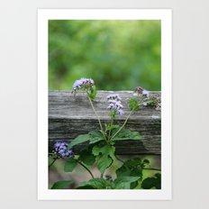September Wildflower Art Print