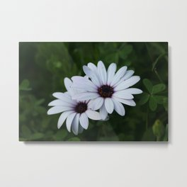 Friendship - Two African Daisies Metal Print