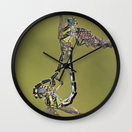 "Mating of two dragonflies ""Onycogomphus uncatus"" Wall Clock"