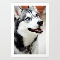 husky Art Prints featuring HUSKY  by Porterhouse LA