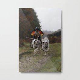 Siberian Huskies Metal Print