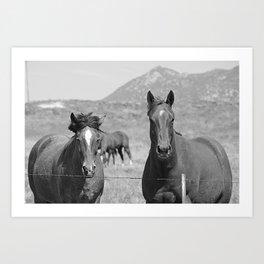Horses Staring Art Print