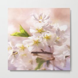 Cherry Blossoms In The Spring Metal Print