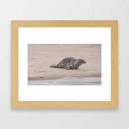 Cape Cod baby seal Framed Art Print