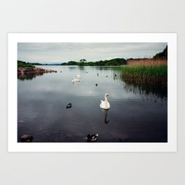 Ireland - White Swans, Black Waters Art Print