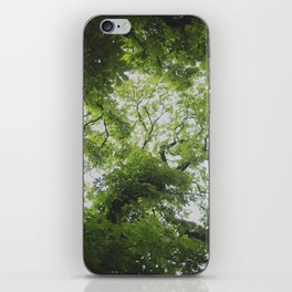 Up in the Trees Above iPhone Skin