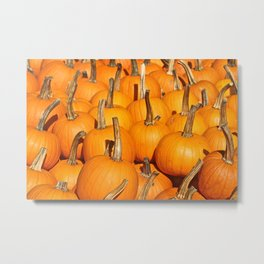 Orange Fall Pumpkins Metal Print