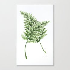 Two Ferns Canvas Print