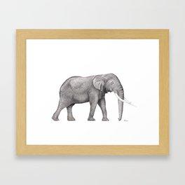 Bull Elephant  Framed Art Print