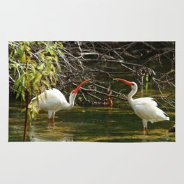 Ibis Dating Place Rug