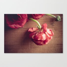 Repose Canvas Print