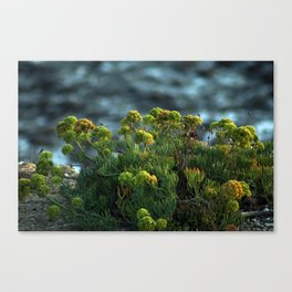 Succulent Wildflowers by the Ocean Canvas Print