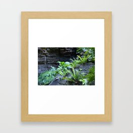 Green ferns growing on lava Framed Art Print