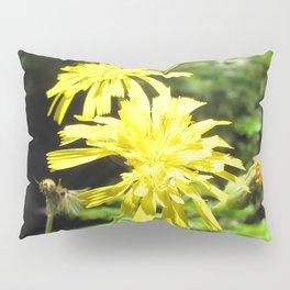 Watercolor Flower, Canada Hawkweed 02, Cape Breton, Nova Scotia, Canada, Beauty and the Beast Pillow Sham