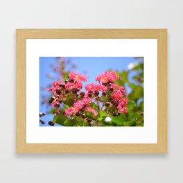 Blooming Pink Crepe Myrtle Flowers Framed Art Print
