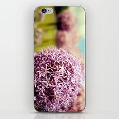 Alliumns iPhone & iPod Skin