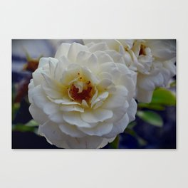 Bloom in White Canvas Print