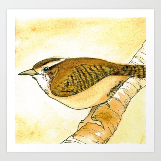 Yellow Carolina Wren Art Print