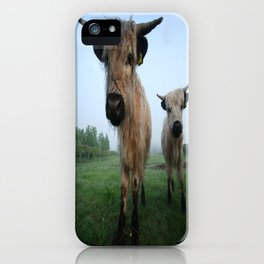 Young White High Park Cattle iPhone Case