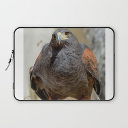 Harris Hawk Laptop Sleeve