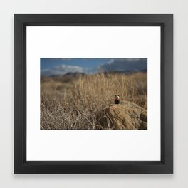 Desert Dog Framed Art Print