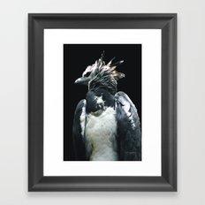 Harpy Eagle Framed Art Print