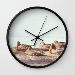 Lazy ducks Wall Clock