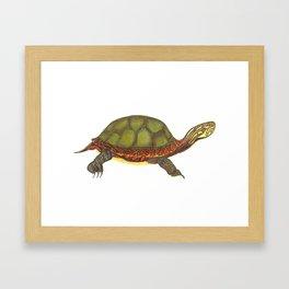 Painted Turtle Framed Art Print