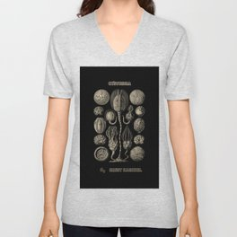 """""""Cystoidea"""" from """"Art Forms of Nature"""" by Ernst Haeckel Unisex V-Neck"""