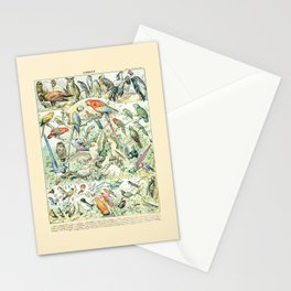 Wild Bird Diagram // Oiseaux V by Adolphe Millot 19th Century Science Textbook Artwork Stationery Cards