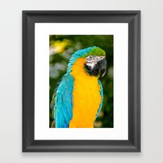 Blue and Gold Macaw Parrot Framed Art Print