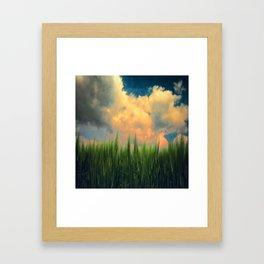 barley field Framed Art Print