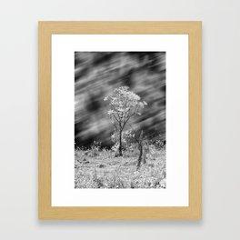 Tree Black White Long Exposure Framed Art Print