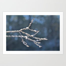 Frozen, ice and snow covered branches Art Print