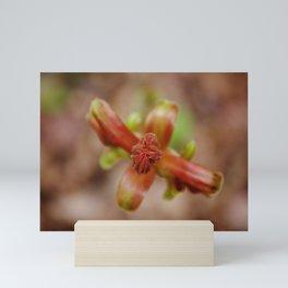 Plant in Spring Mini Art Print