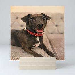 Black Jack Russell / Chihuahua Mini Art Print