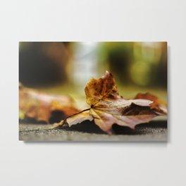 autumn_1 Metal Print